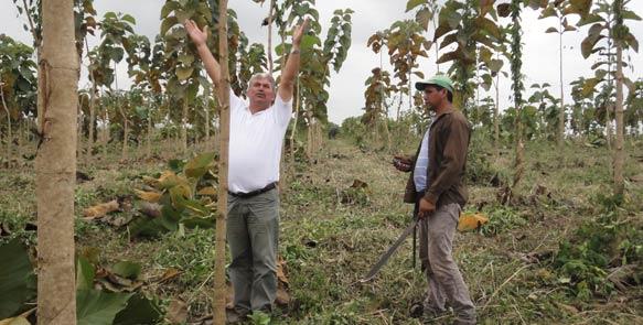"""Schon nach gut zwei Jahren sind die Teakbäume auf """"Santa Maria"""" bis zu drei Meter hoch."""